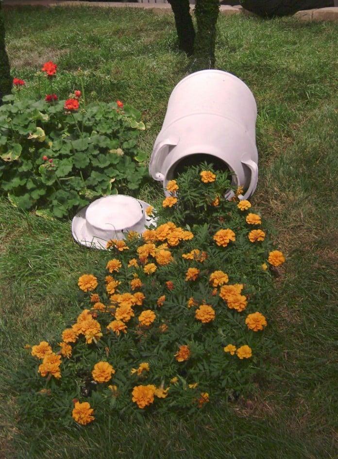 Spilled Flowerpots Marigolds