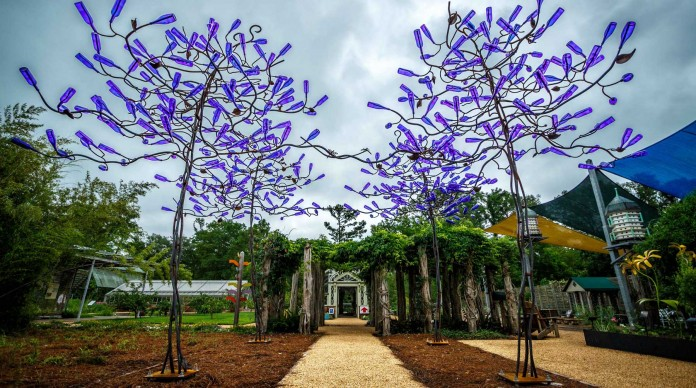 Beautiful Jacaranda bottle trees