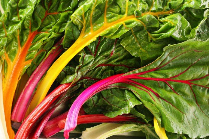Rainbow Chard for Containers