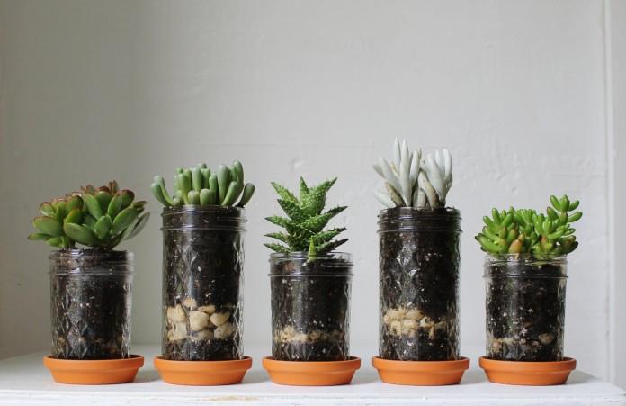 mason jar flowerpots
