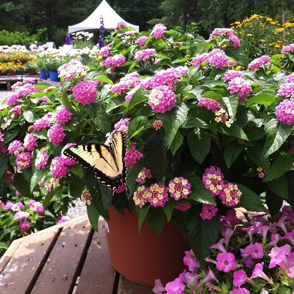 Butterfly Garden Container