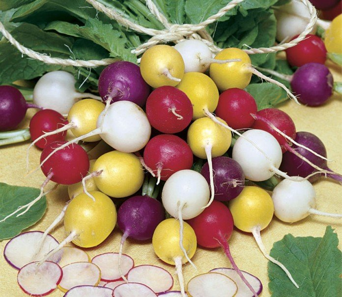Rainbow Radishes for your container garden