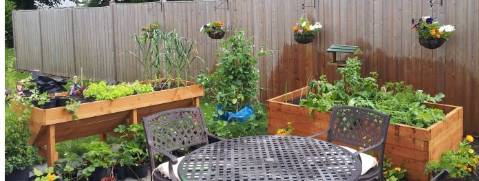 Container Gardening with Gourmet Vegetables