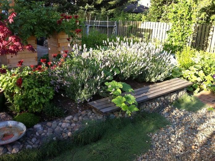 Edible Landscaping Lavender Squash