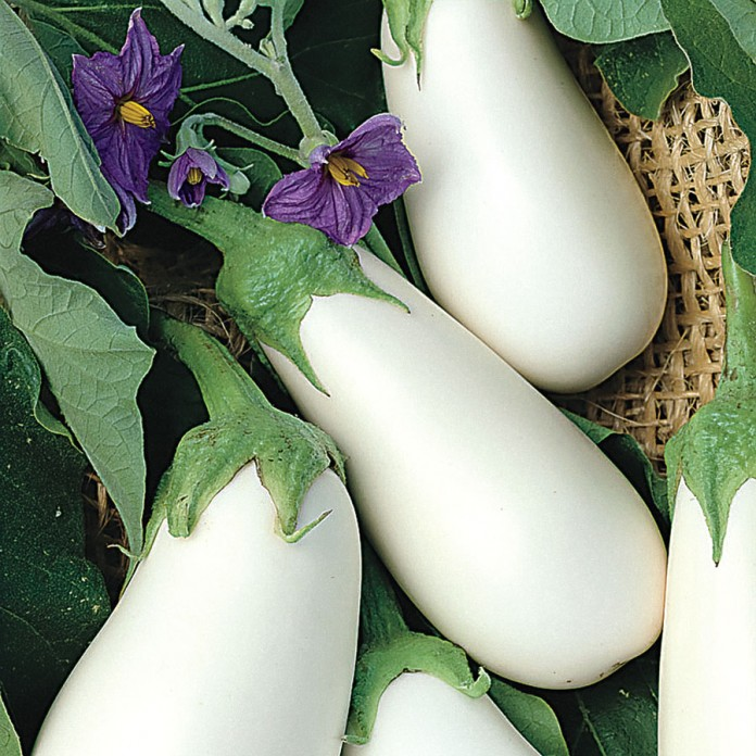 Gardening with White Egglplant