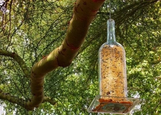 Glass Wine Bottle DIY Bird Feeder Idea
