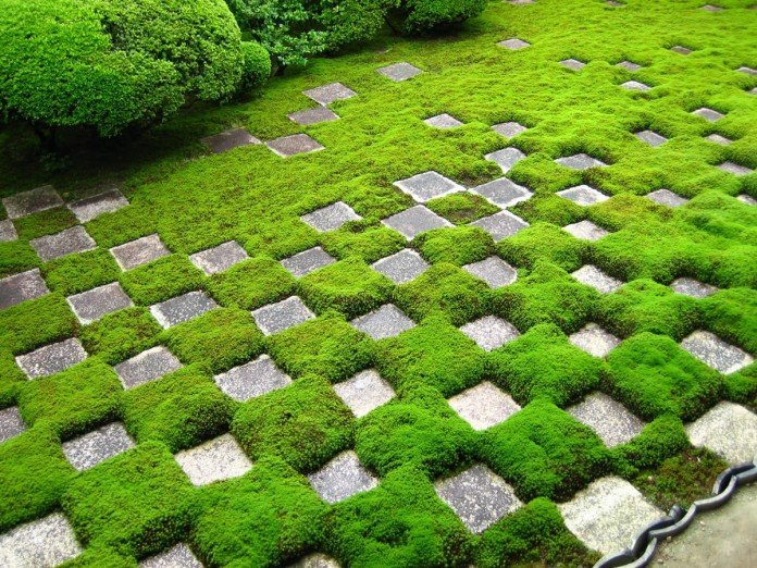 Japanese Zen Garden of Moss