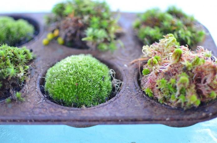Moss muffins