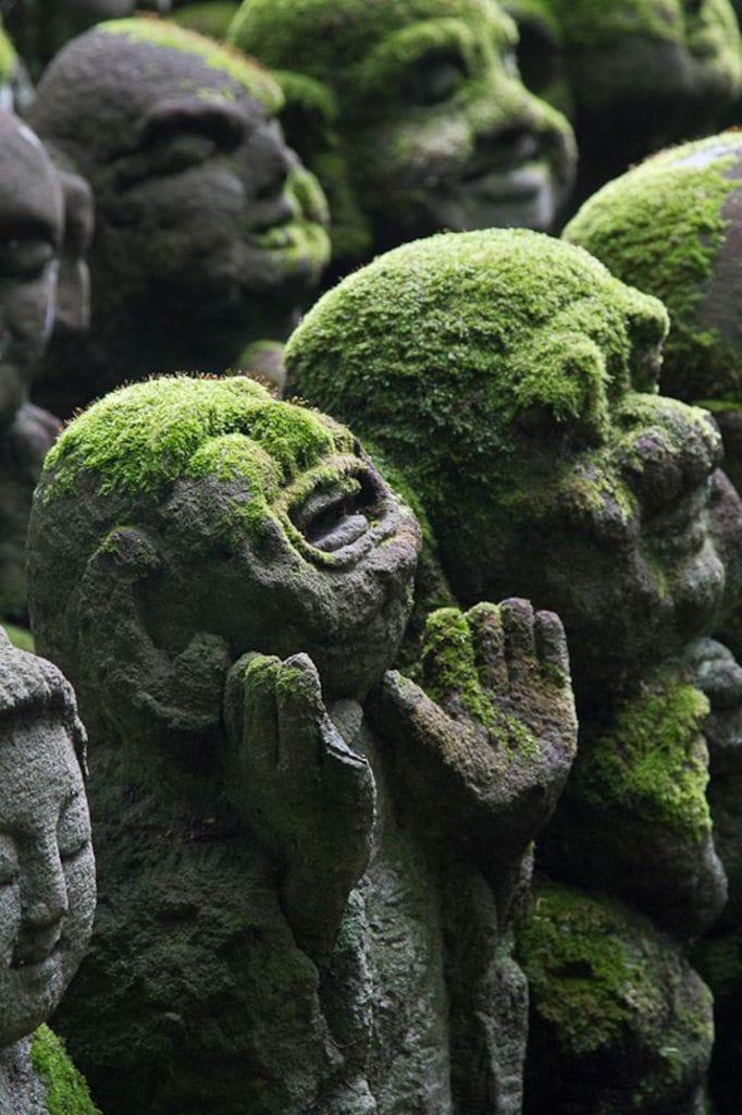 Laughing Buddha Moss