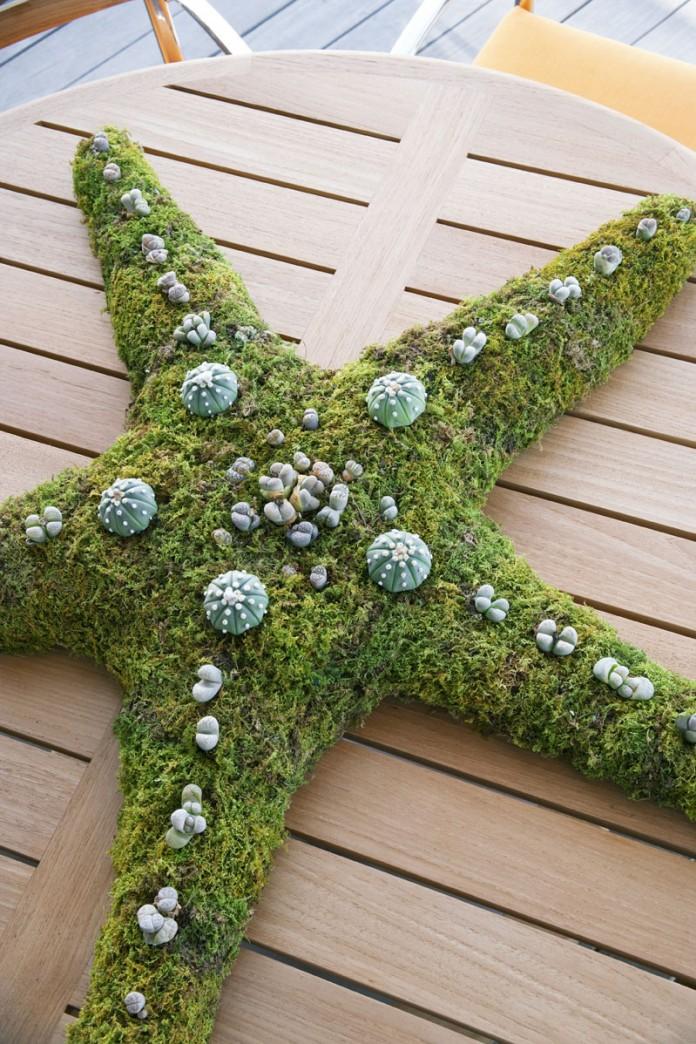 Moss starfish