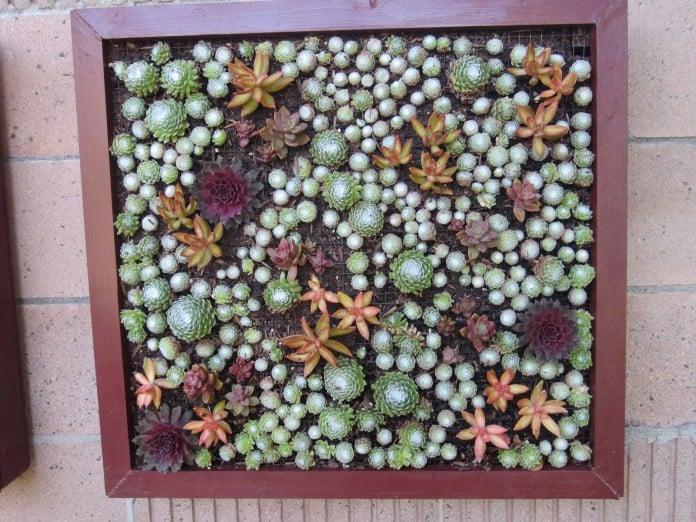 Succulent combo