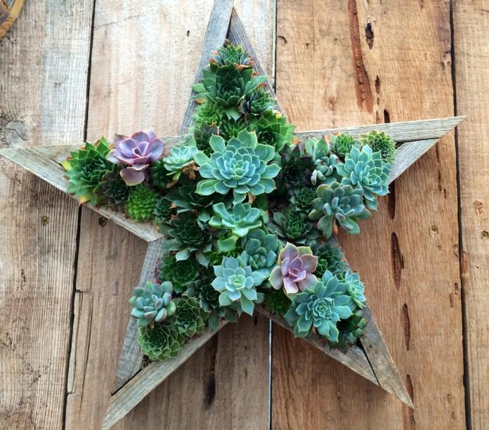 Succulent star gardening