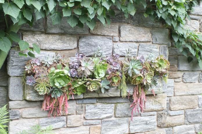 Succulent wall gardening