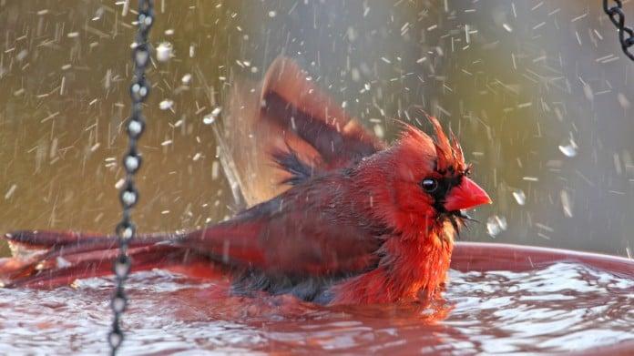 49 Unique Bird Bath Ideas: Design a Garden Spa for the Birds
