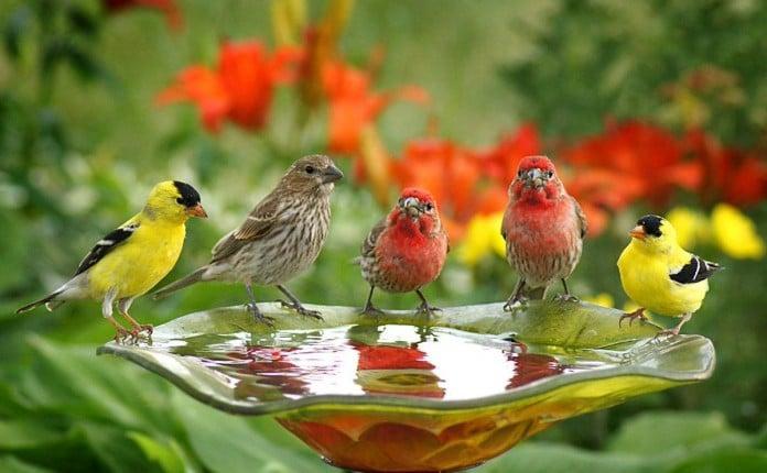 Around the water cooler bird bath