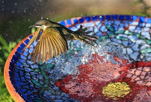 Hummingbirds love bird baths