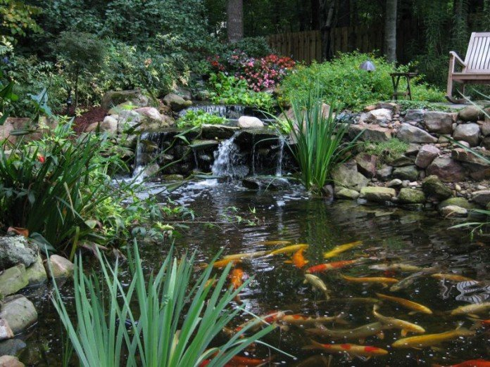 Koi Pond Flower Garden