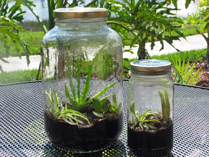 Garden in a mason jar