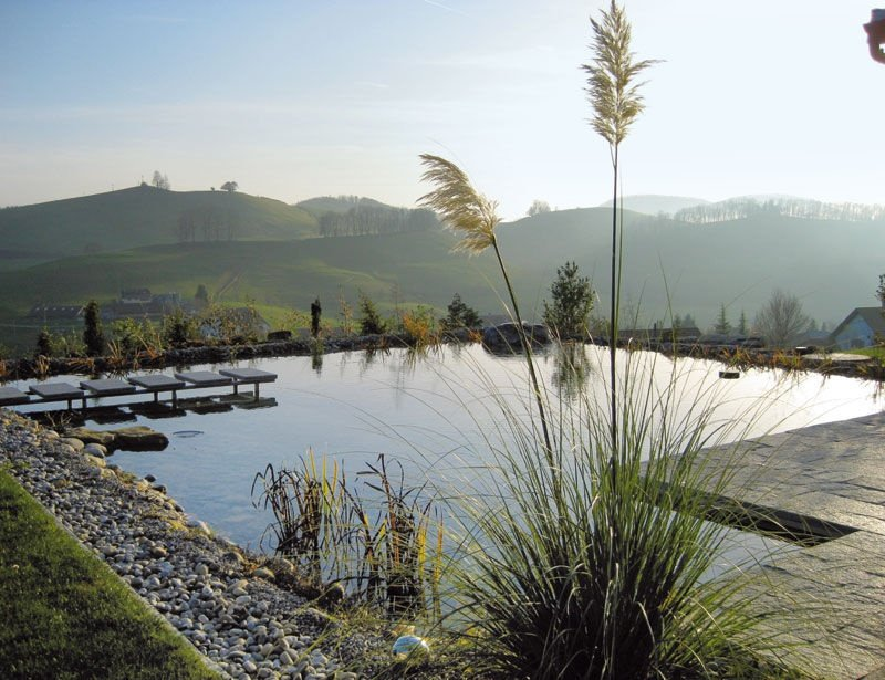 Natural pond grasses