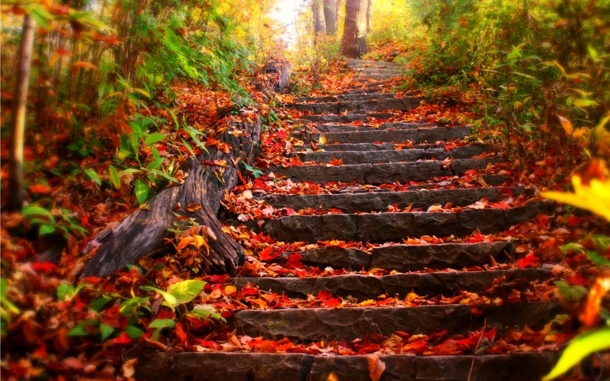 The stairs are covered in autumn leaves