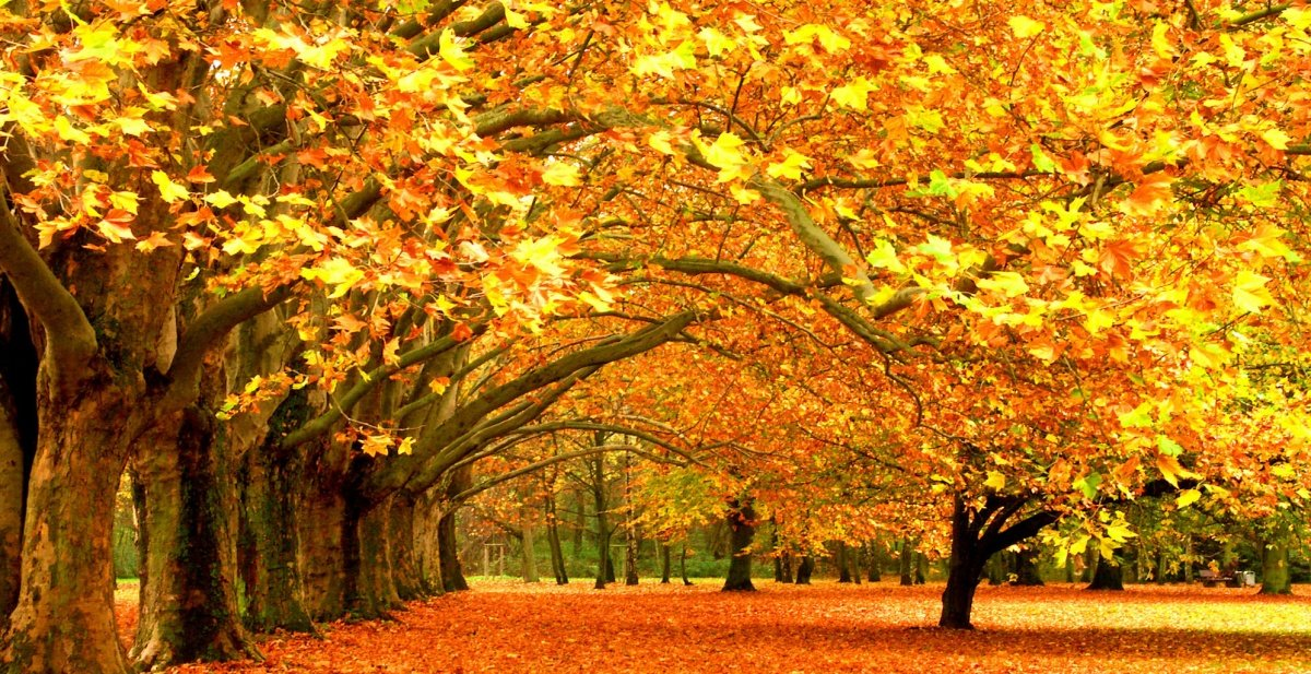 Incredible autumn leaves
