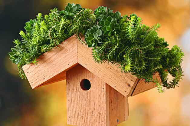 Green Roof BirdHouse Wooden
