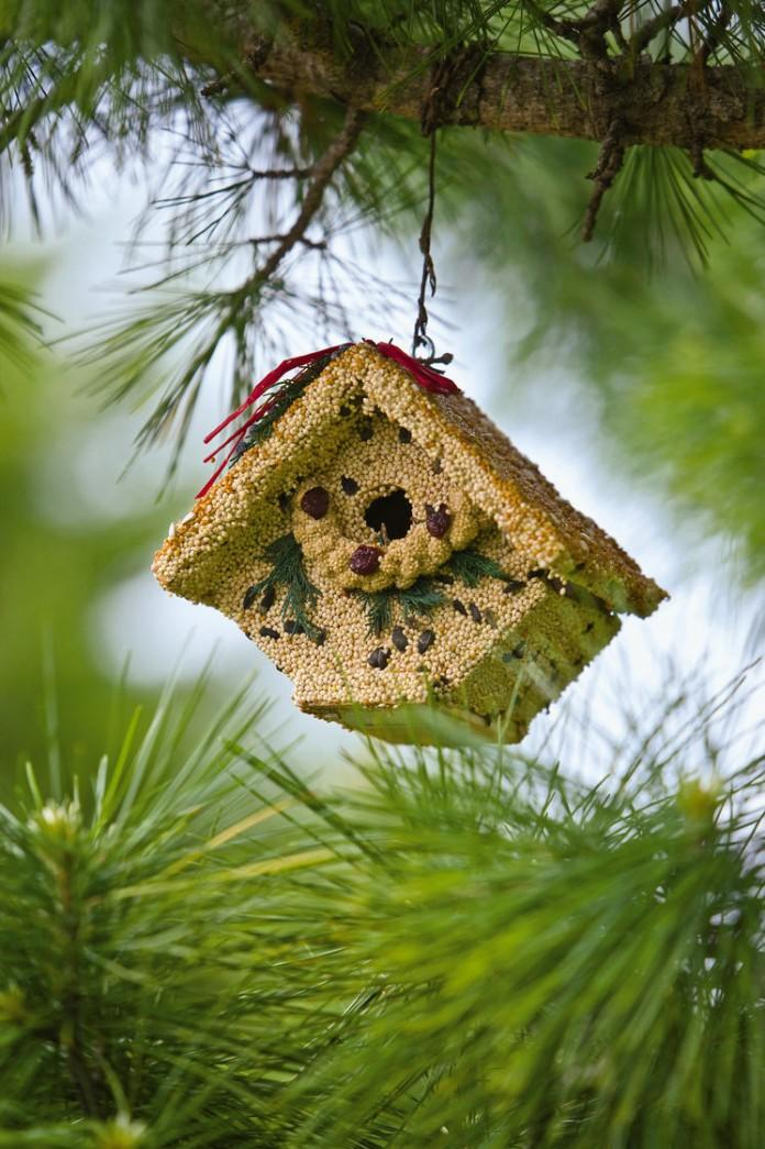 Food and Shelter in one Birdhouse