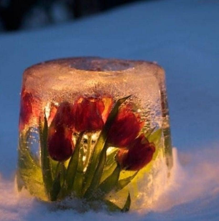 Incredible Ice Candle