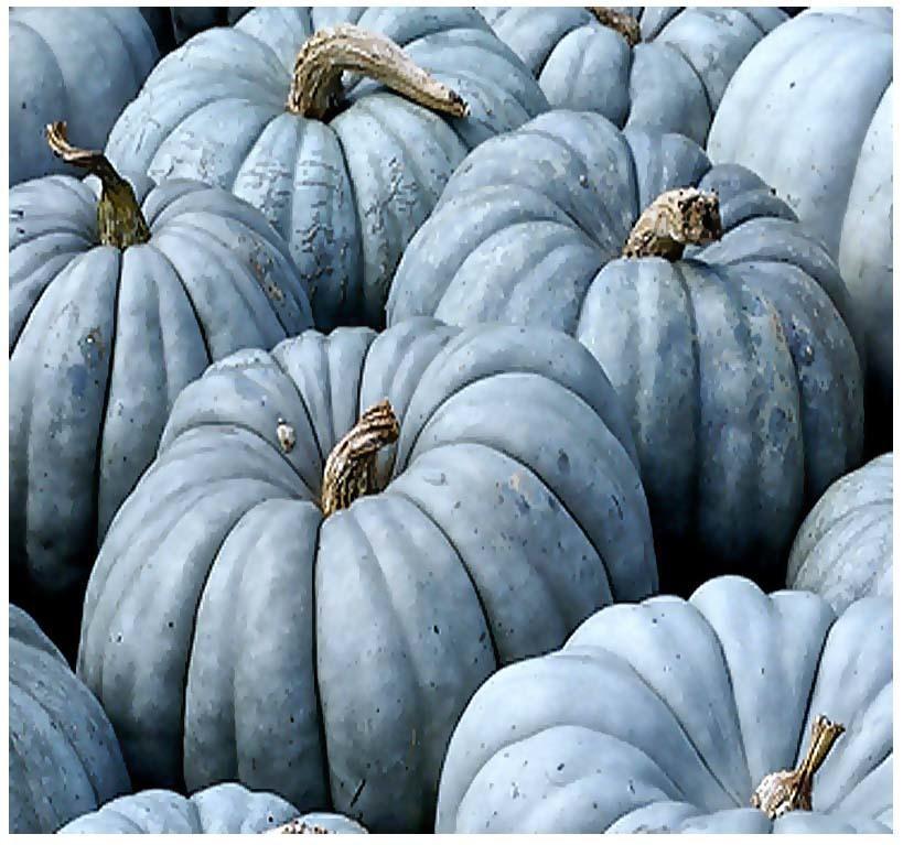 unusual seeds for blue pumpkin