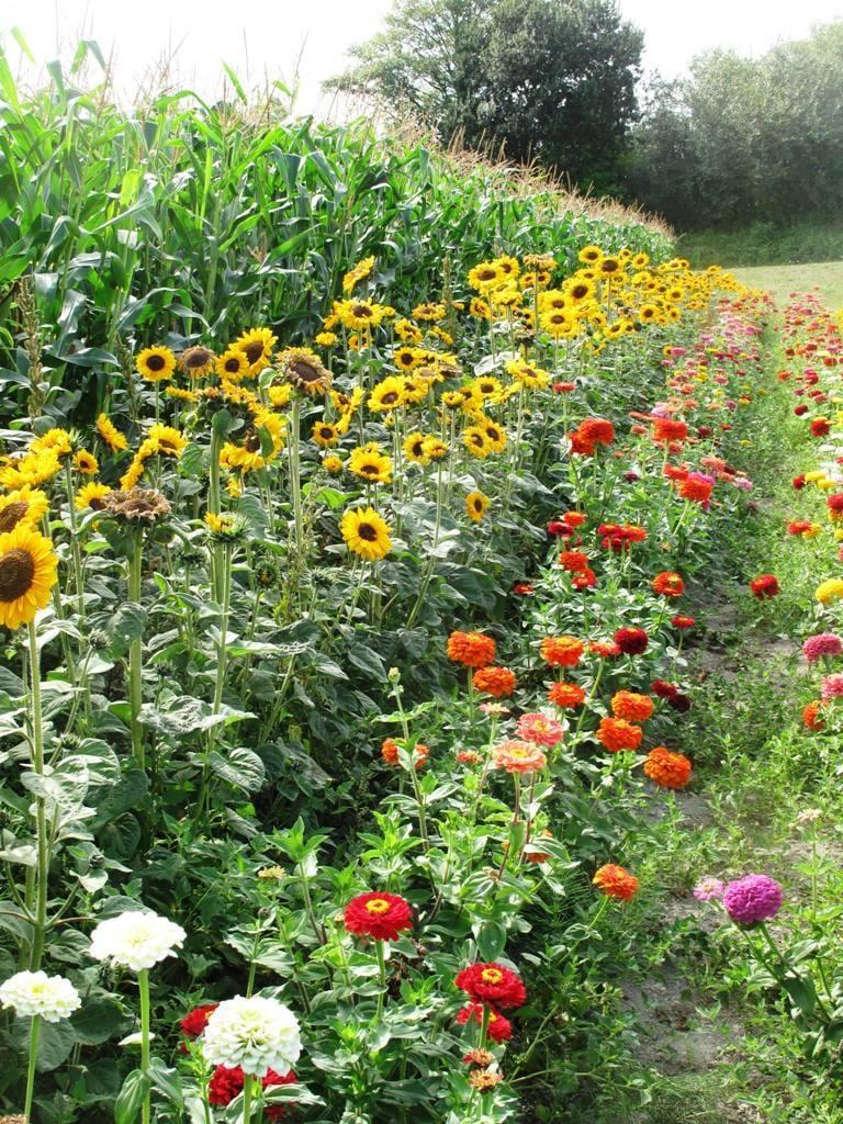 Vegetables and Flower Garden