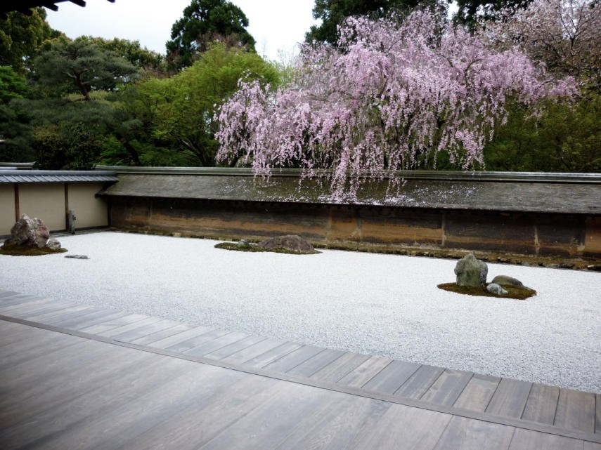 Roof catches cherry blossoms