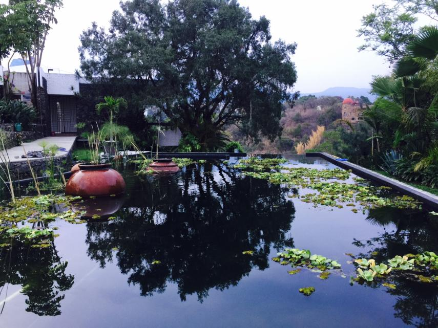 Natural Swimming Pools Step By Step How To Build Guide