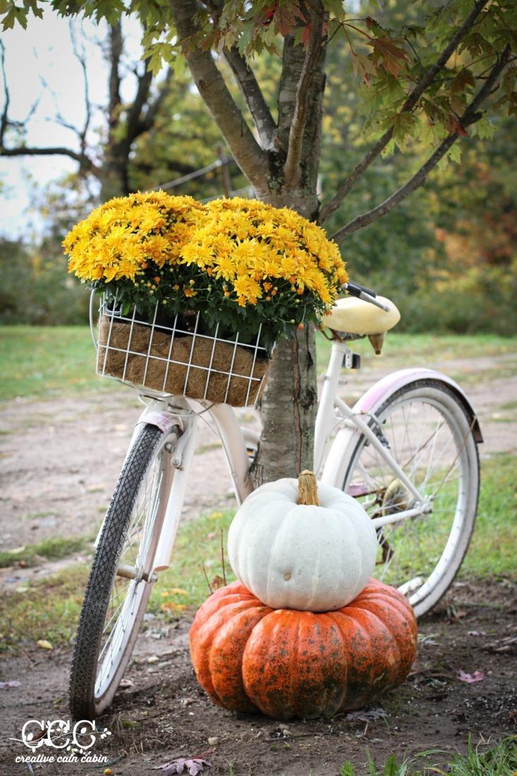 Fall bike basket idea with Mums and Pumpkins
