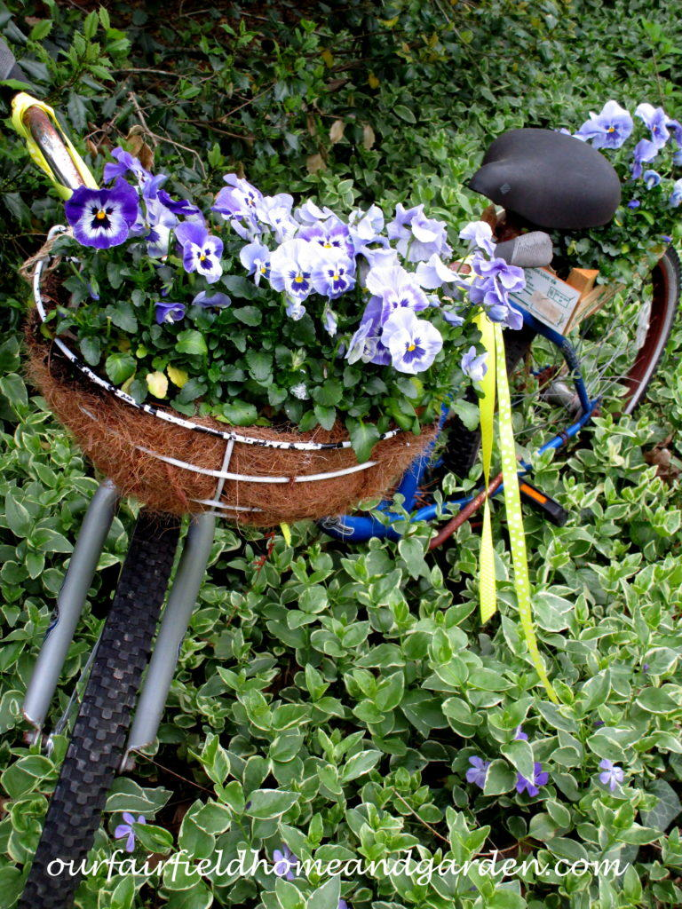 Bicycle Planter with pansies