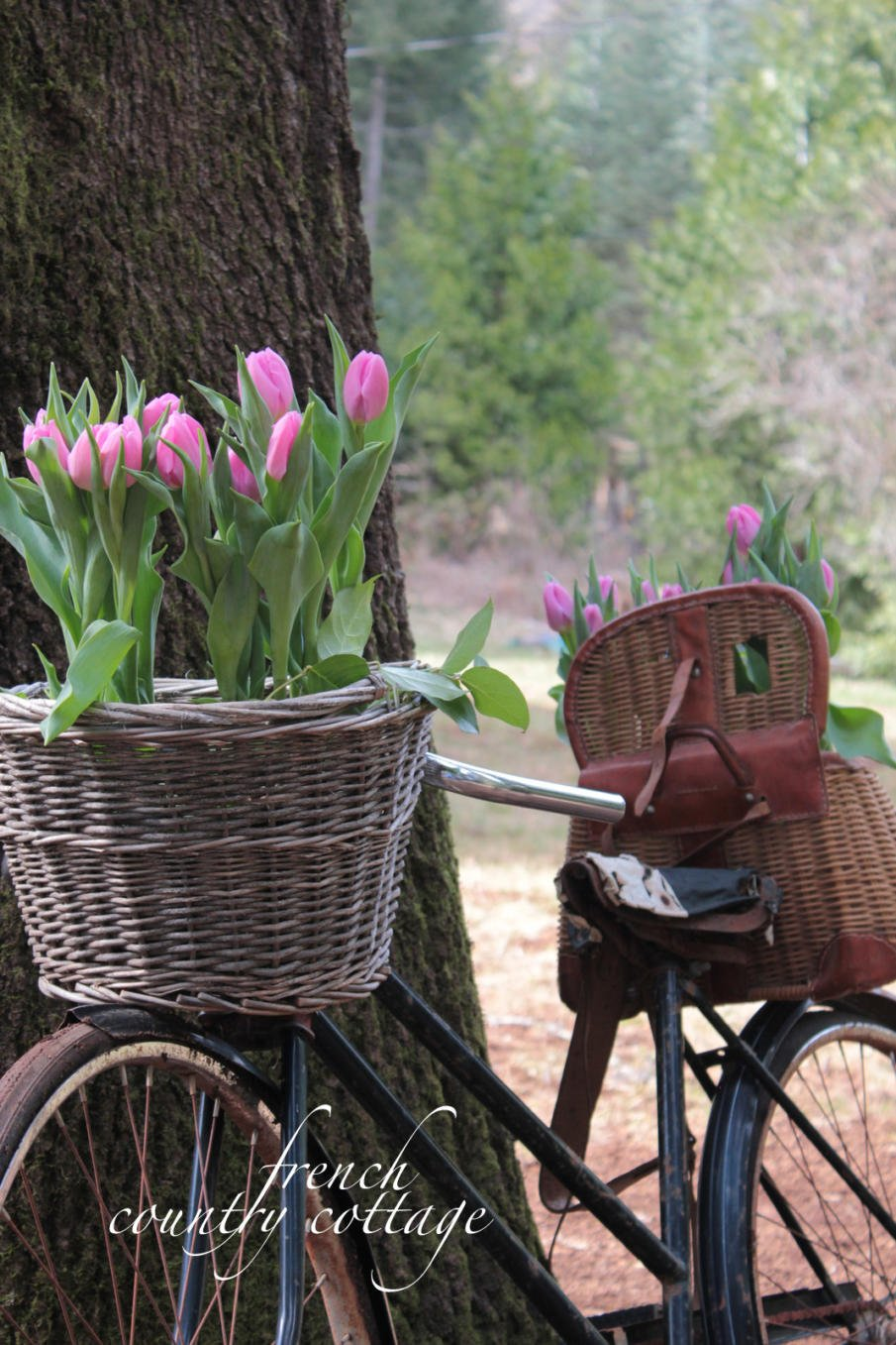 French Country Idea for a Bicycle Planter for Spring