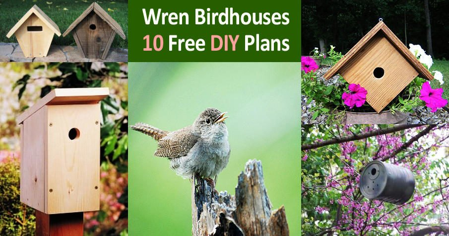 Free DIY Wren Bird House Plans
