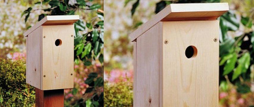 One Board Wren Birdhouse Plan