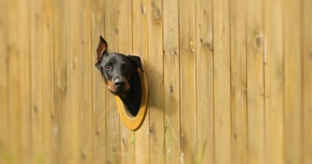 DIY Dog Fences - Design Ideas and Installation Tips