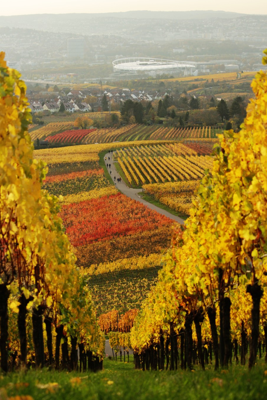 Autumn seasonal colors in the steep German vineyards