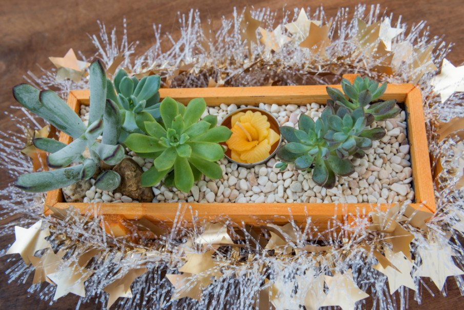 Succulents in natural pinewood box with river rocks and a flower candle