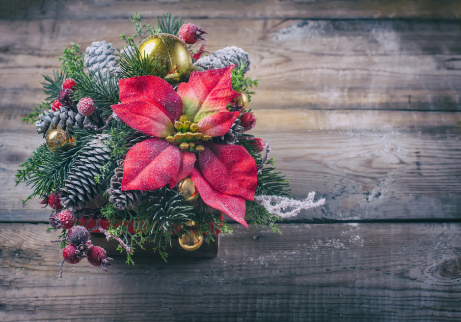 Poinsettias shine against a backdrop of pine cones, sprigs of berries, and pine boughs
