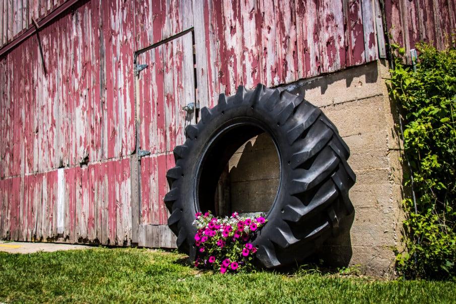 huge tractor tire planter by a barn door