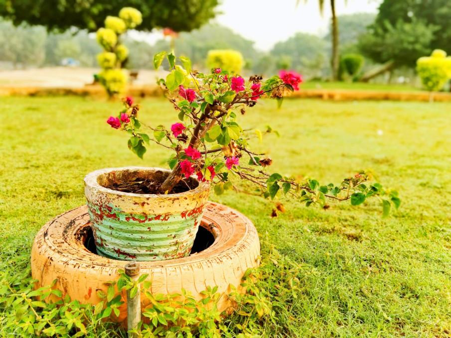 flower pot inside a tire