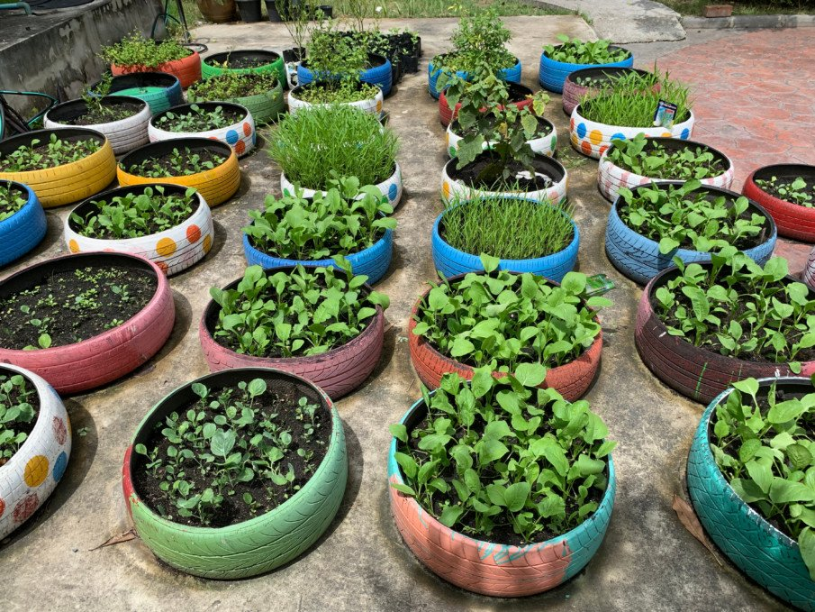 many rows of decorated tire planters with herbs and plants