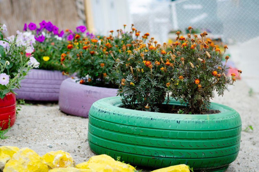 rows of single tire planters with flowers