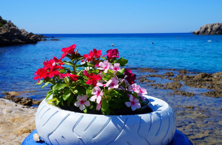 single tire planter with flowers by the sea