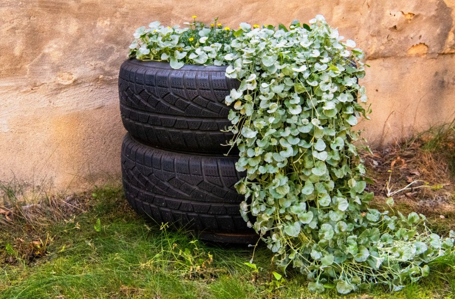 unpainted stacked tire planters with a creeping plant