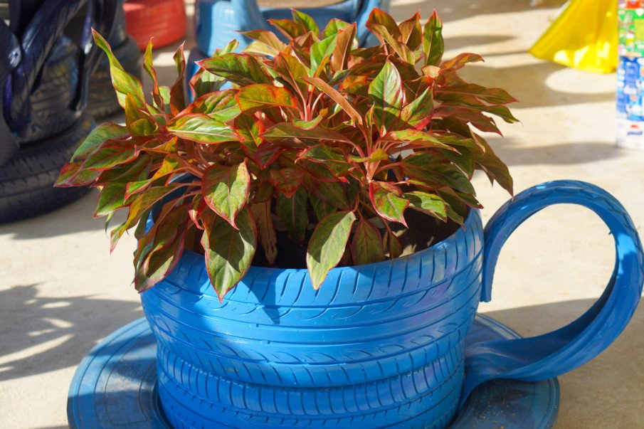 teacup tire planter with a leafy plant