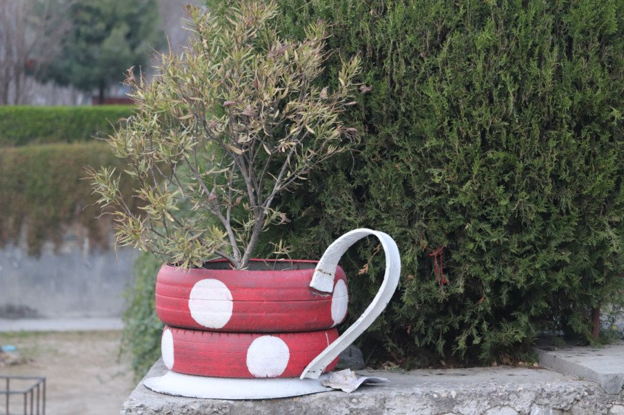 polka dot painted teacup tire planter with a small tree