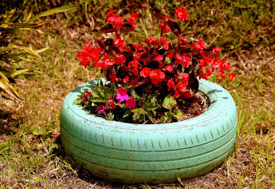 single painted tire planter with a big flower plant